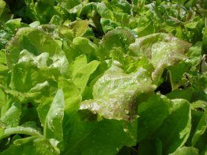 salad-1032802-m