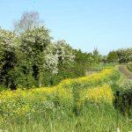 Car Dyke in spring