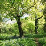 Woodland in spring